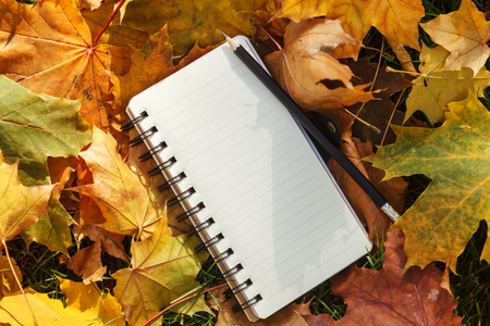 A notebook made of white paper with a black spring and a pencil lies on a colorful background of yellow autumn maple leaves.