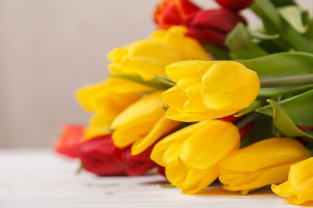 Flowers of spring tulips in dew, on wooden white boards of the table. Yellow and red tulips on a beige background. Greeting card for mother's day, Easter