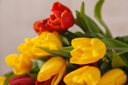 Yellow red flowers tulips fresh bouquet with green leaves and stem with wet drops of fresh water dew close up on a beige background