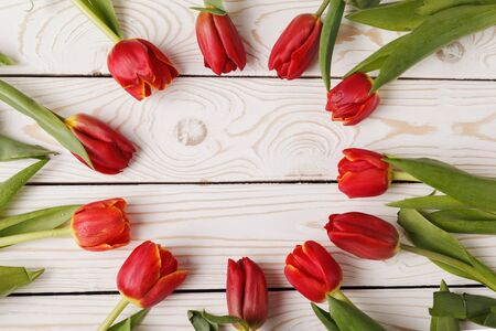 Fresh tulips on a white wooden background for Mother's Day. Beautiful red tulips made out in circle on background of white painted wooden planks with space for text. Top view, flat lay