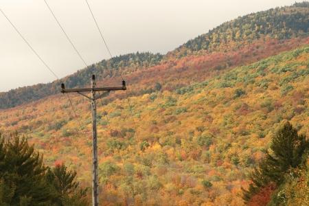 Mountain of Foliage