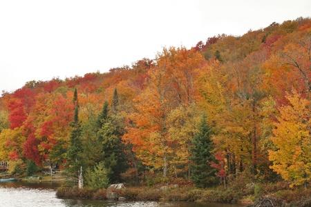 Foliage at the edge of the lake Фото со стока