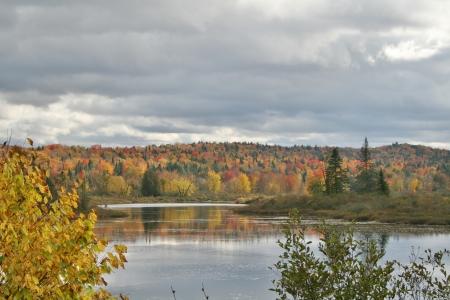 Foliage surrounding lake