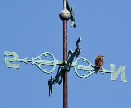 wiatrowskaz: Sparrow Singing na Vane