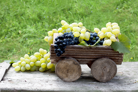 Big clusters of ripe blue and green grapes in a wooden box Banco de Imagens
