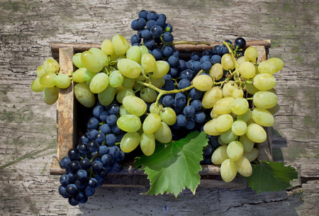 Big clusters of ripe green and blue grapes in a wooden box
