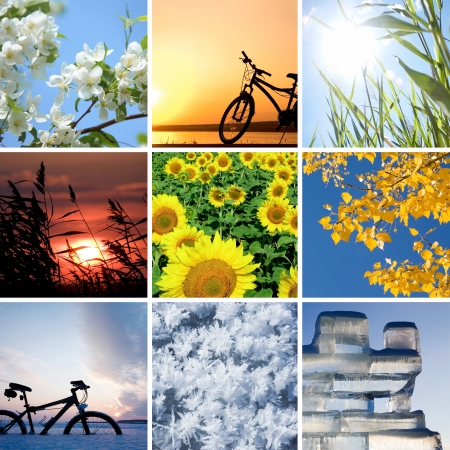 successively: Collage of the four seasons: spring, summer, autumn, winter