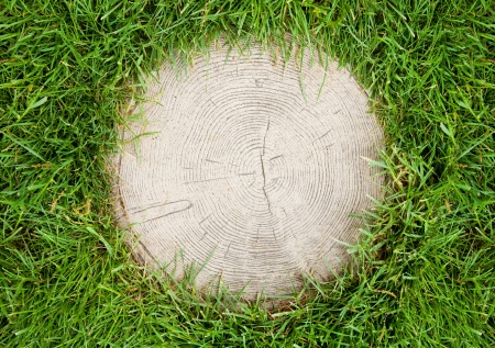 felling: circular frame of green grass around the tree cut Stock Photo