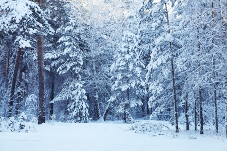 cold day in the snowy winter forest Stock Photo - 17315325