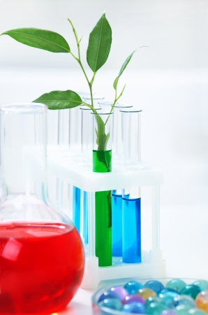 Different laboratory glassware with color liquid and with  shoots plant Stock Photo - 17459765