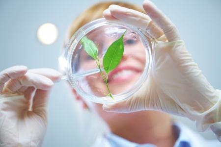 investigador cientifico: Mujer cient�fico que sostiene un tubo de ensayo con la planta