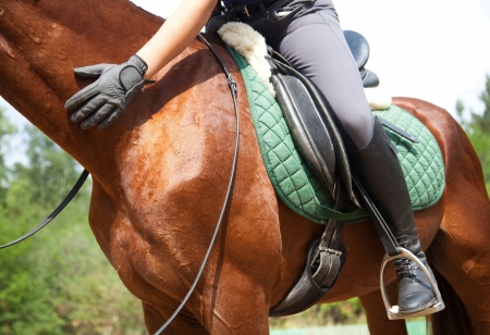 horseback riding: Clouse-up of woman rider and horse