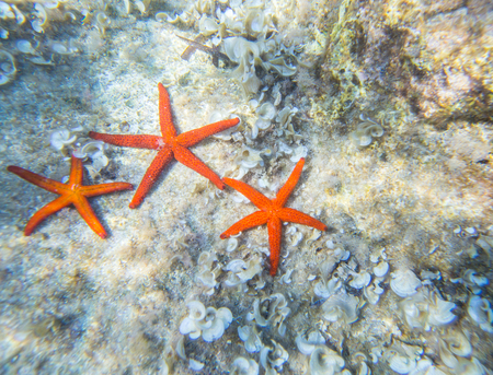 group of sea stars on the bottom of the sea Stock Photo