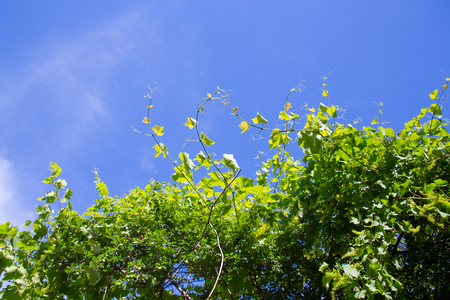 green leaves of a plant on the blue sky Stock Photo