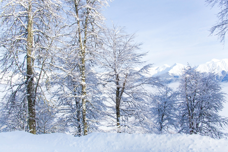 Beautiful winter landscape of high mountains with snow covered trees