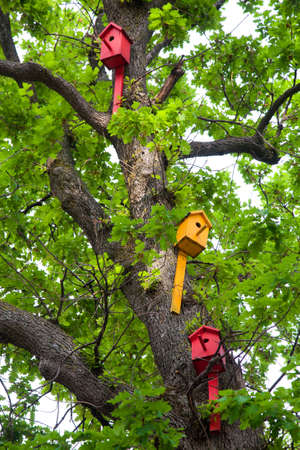 many colored birdhouses on the trunk of a green oak