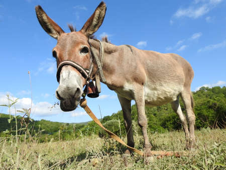 young donkey grazes in the pasture Imagens