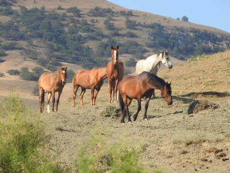 Herd of beautiful wild horses in the pasture Imagens