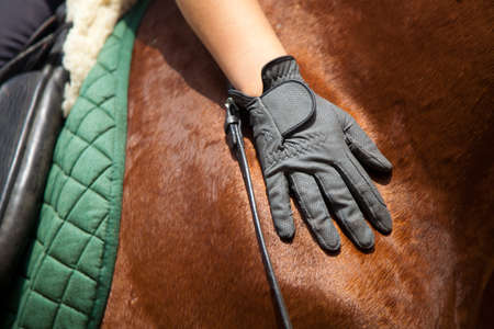 Hand in a glove on a horse's rump