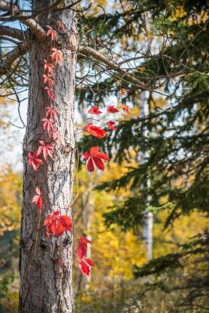 Tree bark during autumn time photo