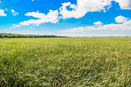 Landscape view of a field of grass during a sunny summer day  photo