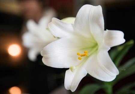 Close up shot of white flowers with fine detail  photo