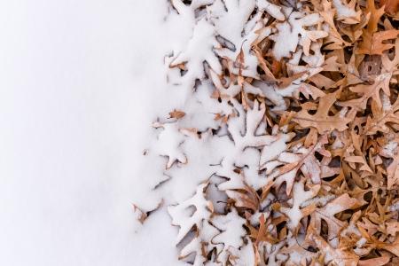 Vista única De Hojas De Color Rojo Caídos Y Lado A Lado La Nieve ...