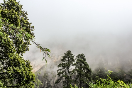 Mountain ranges with trees during a foggy day Stock Photo - 24416506
