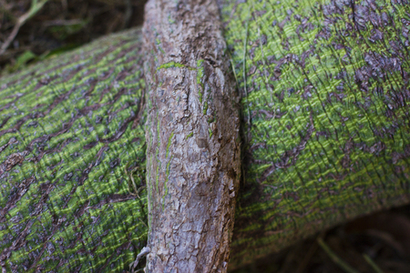 bough: Green tree bark Stock Photo