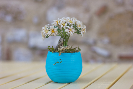 melancholy: White flower in a blue pot Stock Photo