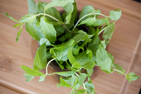 lemon balm: Fresh mint in the wooden brown bowl on the table