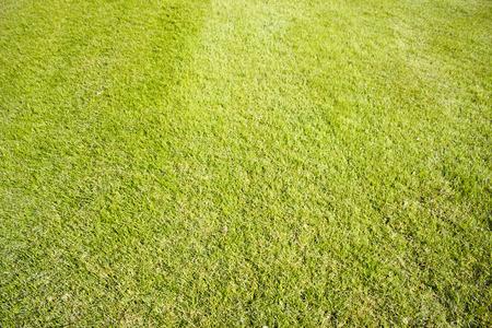 Golf course in Belek. Green grass on field.