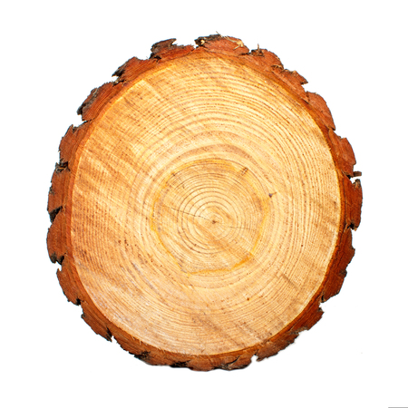Round saw cut of pine logs. Wooden background