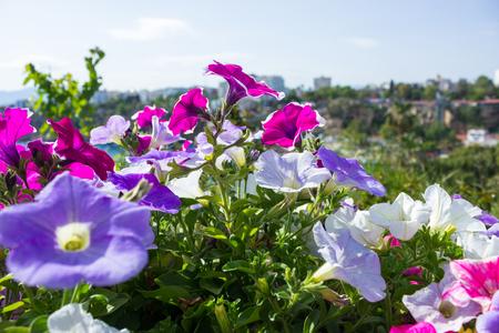 Vista del puerto mediterráneo de Antalya a través de las flores brillantes en primer plano
