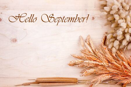 Dried grain ears and reeds on wooden table. Autumn harvest of bread. Lettering Hello September