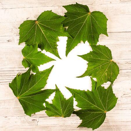 Flatlay of the green maple leaves. Botanical Mockup Zdjęcie Seryjne