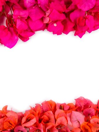 Flatlay of flowers and leaves of the bougainvillea. Botanical Mockup