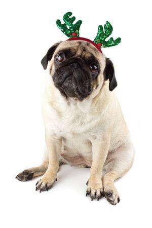 Sad innocent pug dog with Deer Antler Headband