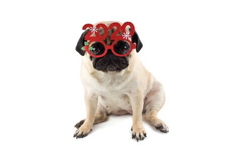 Sad innocent pug dog with Red Christmas glasses with numbers 2020