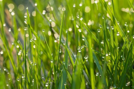Grass in dew Stock Photo - 7617948