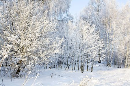 Winter wood Banque d'images
