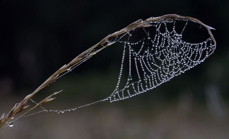 Web in drops of dew in the morning photo