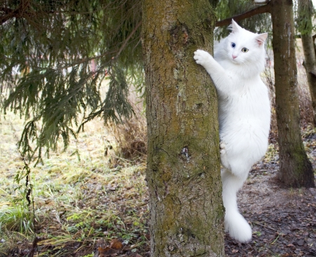face in tree bark: White cat on a tree