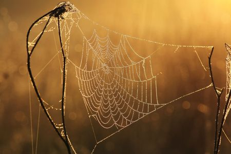 Web in dew and sun rays Stock Photo - 7800034