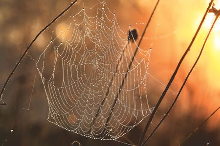 Web in dew and sun rays photo