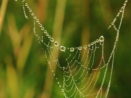 Web in drops of dew in the morning Stock Photo