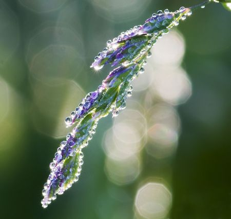 Dew drops on a grass in the morning Stock Photo - 7807383