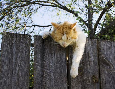 Red cat 版權商用圖片