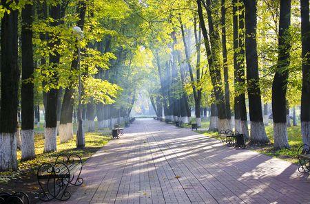 Autumn park in sun rays photo