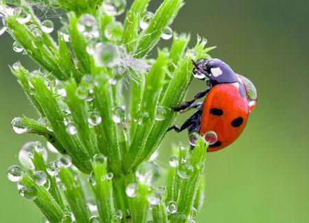 The ladybird creeps on a grass